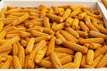 few yellow corn .