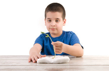 Cute child cultivating plant on cotton for school project