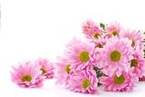 Fototapete Chrysanthemum - Weiß - Blume