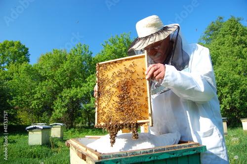 pszczelarz pracuje w pasiece