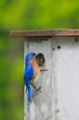 Nesting Box Blue