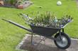 mit Blumen bepflanzte Schubkarre als Gartendekoration
