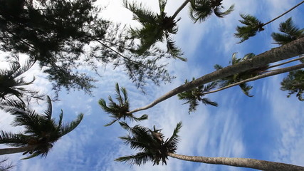 Palms blowing in a wind against cloudy sky