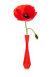 coquelicot et soliflore rouge, poppy and red vase