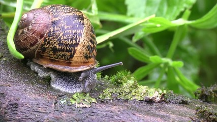 vue macro sur un escargot