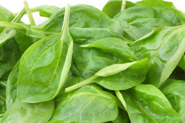 fresh spinach leafs close up