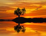 Fototapeta drzewo - wieczorem - Wzgórze