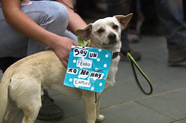 dog demonstrator II