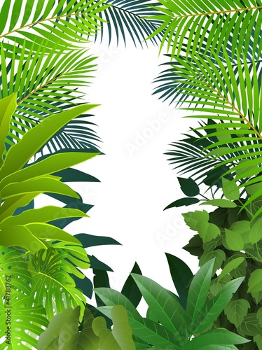 Fototapeta na wymiar Tropical forest background