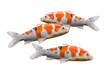 Carp Fish Koi Fish Isolated On...