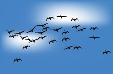 swans in blue sky illustration