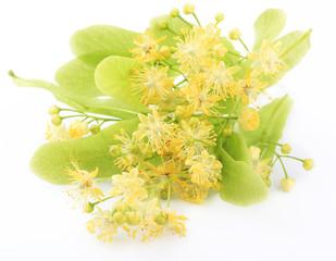Linder flowers