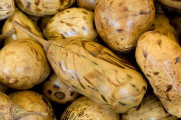 Polierte Baobabfrüchte - Affenbrotbaum