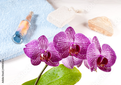 Fototapeten,orchidee,veilchen,stengel,stiel
