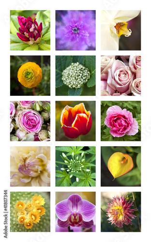 Fleur, jardin, jardinage, jardinerie, végétation, couleur