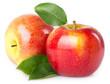 Leinwanddruck Bild - Fresh apples