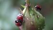 accouplement d'insectes