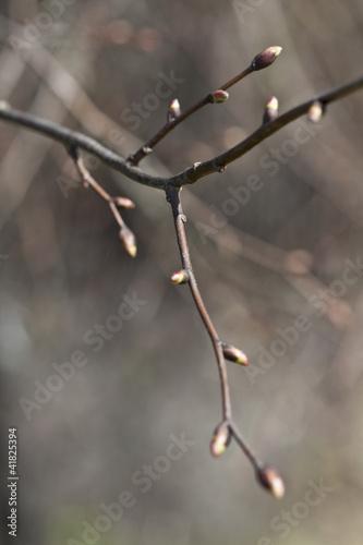 Buds opening in spring.