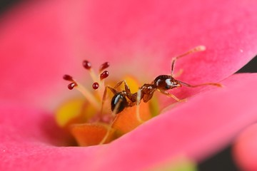 Ant on flower