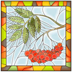 Vector illustration of rowan branch with berries.