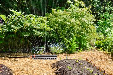 Kitchen Garden with sprinkler