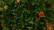 Prato in fiore