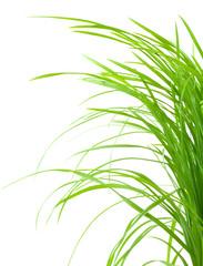 brins d'herbe verte