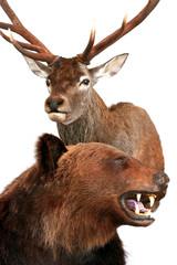 bear and deer