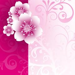 Floral, Frühling, Pink, Pflanze, abstrakt, Sommer, Freude