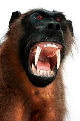 baboon trophy