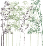 Fototapety vector background with bamboo forest