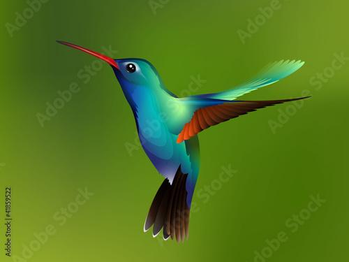 Fototapeten,rot,hübsch,flügel,vögel