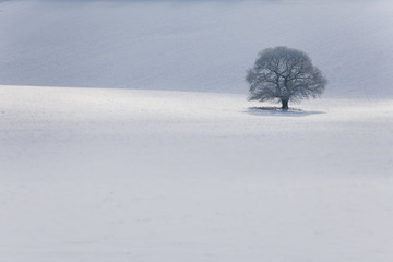 Isolated tree in snow covered landscape