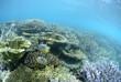 浅瀬の珊瑚礁