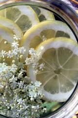 von oben: Glas Wasser, Zitronen und Holunder