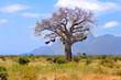 ������, ������: Baobab in African savanna