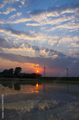 Staande foto Stockholm sky at sunset over the rice fields color image