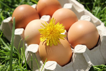 Flower on chicken egg