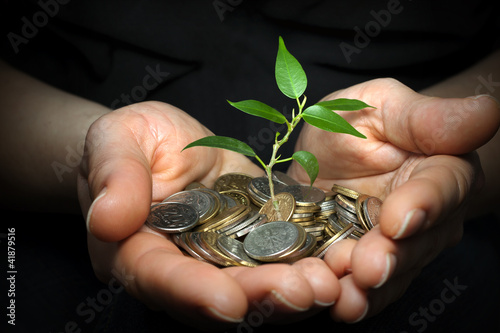 invest money concept with woman hands and plant