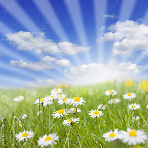 Spring meadow and daisy on green grass