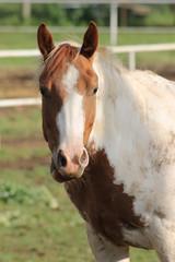 Cavallo in Fattoria