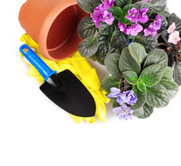 Violet flowers with garden tools