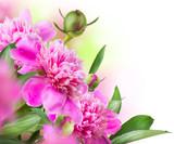 Fototapety Peony Flowers Bouquet