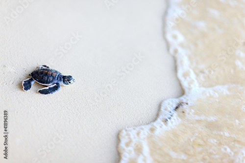 Papiers peints Tortue Baby green turtle