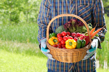 Man hands holding a basket full of vegetables