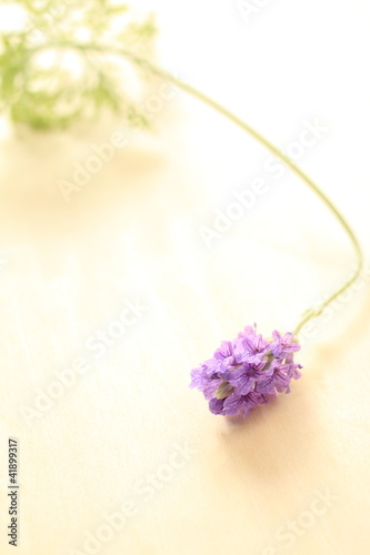 Lavendar for background image