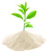 concept protection environnement, arbre vert