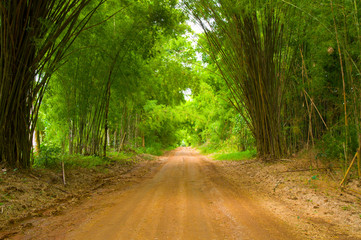The walkway of bamboo