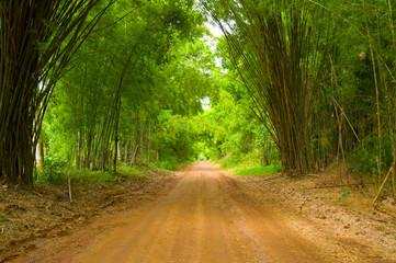 The walkway of bamboo