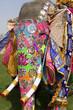 Decorated elephant at annual elephant festival, Jaipur, India.